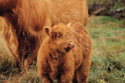 Year Round Or Block Calving: Balancing Herd Economics and Health
