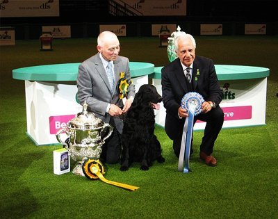 Dog Shows Like Crufts Dog Show
