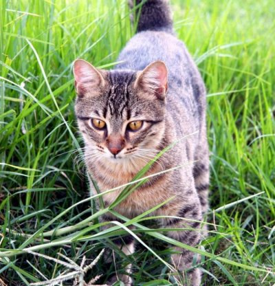 Cutting The Risk of FIV Cats from Feral Populations