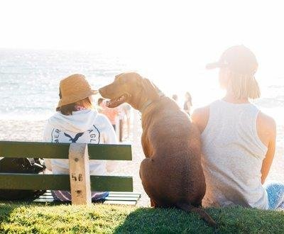 Health Dangers That Can Harm Your Pet This Summer