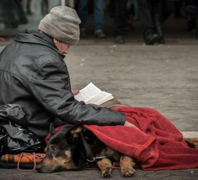 StreetVet Homeless Pets Charity