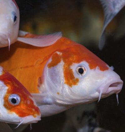A Fishy Tale!