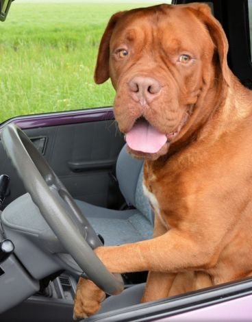 Dogs, Diagnostics and Driver-less Cars
