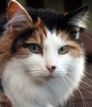 Why Cats Go Viral And How To Make Sure That Yours Doesn't