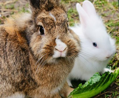 Health In The Hutch: June 17-25 Is RAW – Rabbit Awareness Week