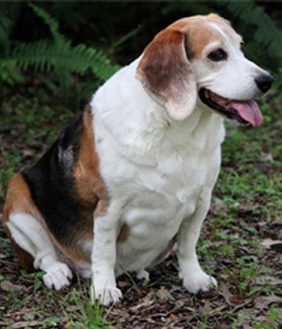 Why Are Britain's Dogs Getting Fatter?